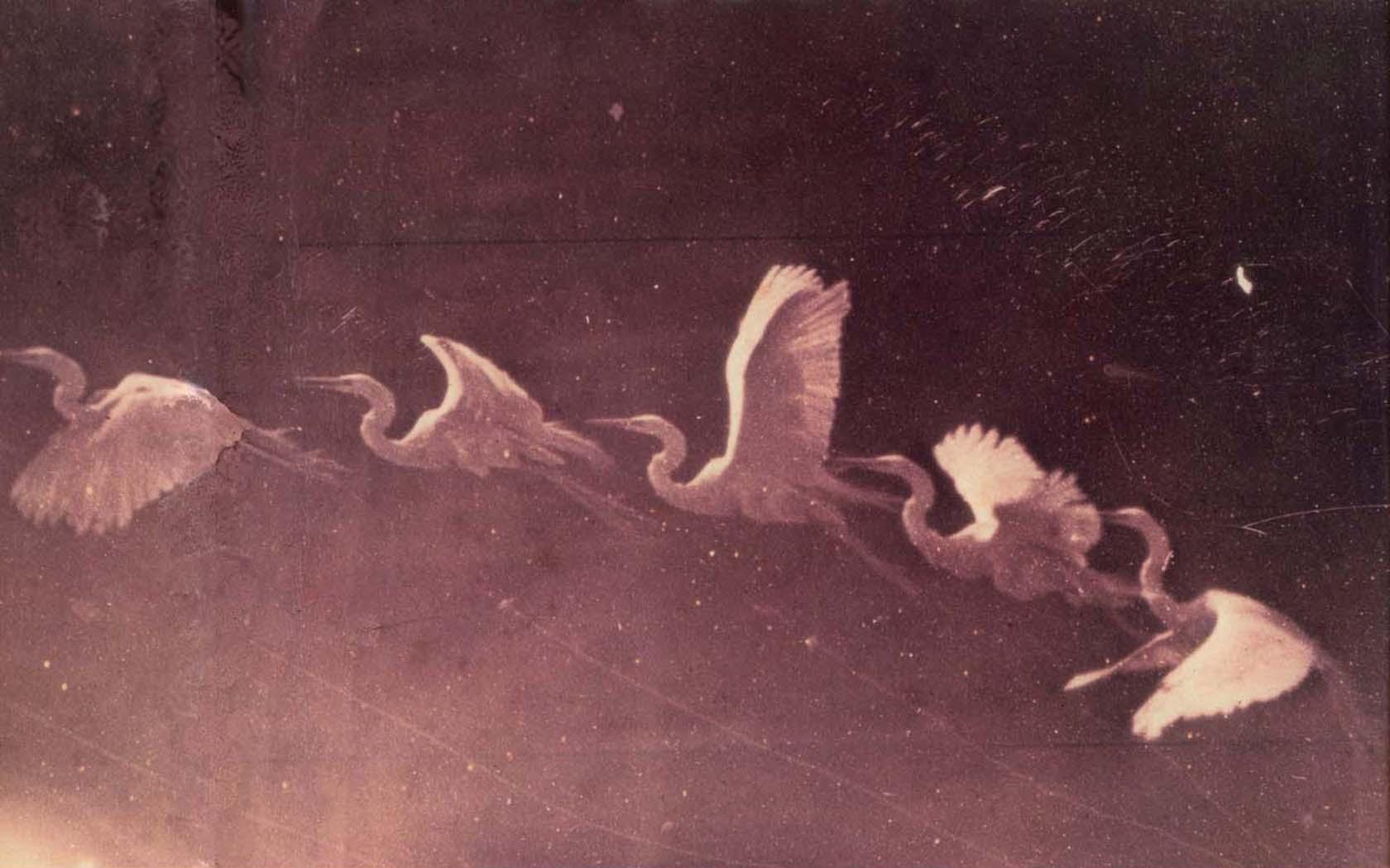 Chronophotographie, Étienne-Jules Marey , 1830 - 1904. Frans leren ,Vivienne Stringa